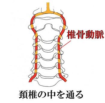 頸椎.jpg